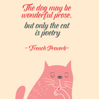 Kocie cytaty - The dog may be wonderful prose, but only the cat is poetry